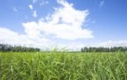 绿色草地 3 8 绿色草地 花卉壁纸