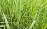 绿色草地 3 6 绿色草地 花卉壁纸