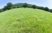 绿色草地 2 2 绿色草地 花卉壁纸