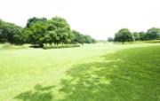 绿色草地 2 1 绿色草地 花卉壁纸