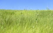 绿色草地 4 20 绿色草地 花卉壁纸