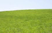 绿色草地 4 19 绿色草地 花卉壁纸