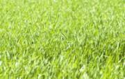 绿色草地 4 18 绿色草地 花卉壁纸