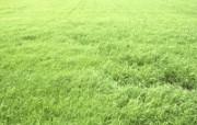 绿色草地 4 17 绿色草地 花卉壁纸