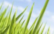 绿色草地 4 11 绿色草地 花卉壁纸