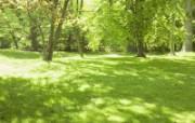 绿色草地 4 9 绿色草地 花卉壁纸