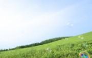 绿色草地 4 8 绿色草地 花卉壁纸