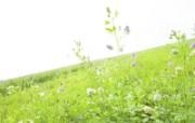 绿色草地 4 7 绿色草地 花卉壁纸