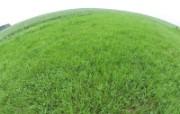 绿色草地 4 6 绿色草地 花卉壁纸