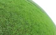 绿色草地 4 5 绿色草地 花卉壁纸
