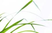 绿色草地 4 3 绿色草地 花卉壁纸
