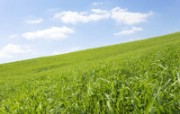 绿色草地 4 1 绿色草地 花卉壁纸
