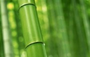 绿色竹林 2 16 绿色竹林 花卉壁纸