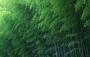 绿色竹林 2 12 绿色竹林 花卉壁纸