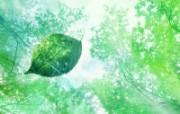 绿叶合成 2 12 绿叶合成 花卉壁纸