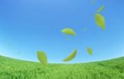 绿叶合成 2 10 绿叶合成 花卉壁纸