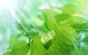 绿叶合成 2 6 绿叶合成 花卉壁纸