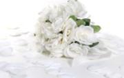 玫瑰写真 5 14 玫瑰写真 花卉壁纸