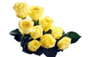 玫瑰写真 4 19 玫瑰写真 花卉壁纸