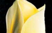 玫瑰写真 6 12 玫瑰写真 花卉壁纸