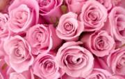 玫瑰写真 6 3 玫瑰写真 花卉壁纸