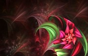 梦幻花朵 3 11 梦幻花朵 花卉壁纸