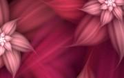 梦幻花朵 3 6 梦幻花朵 花卉壁纸