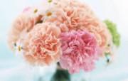 母亲节康乃馨 2 20 母亲节康乃馨 花卉壁纸