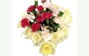 母亲节康乃馨 2 16 母亲节康乃馨 花卉壁纸