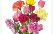 母亲节康乃馨 2 15 母亲节康乃馨 花卉壁纸