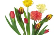 母亲节康乃馨 2 9 母亲节康乃馨 花卉壁纸