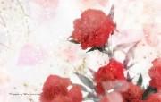 母亲节康乃馨鲜花壁纸 花卉壁纸