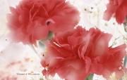母亲节康乃馨壁纸 1600 1200 1600 1200 红色康乃馨图片壁纸 母亲节康乃馨鲜花壁纸 花卉壁纸