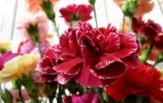 母亲节康乃馨壁纸 1600 1200 红色康乃馨鲜花图片 1600 1200 母亲节康乃馨鲜花壁纸 花卉壁纸