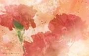 母亲节康乃馨壁纸 1600 1200 1600 1200 红色母亲节康乃馨图片 母亲节康乃馨鲜花壁纸 花卉壁纸