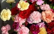 母亲节康乃馨壁纸 1600 1200 康乃馨鲜花馨花束图片 1600 1200 母亲节康乃馨鲜花壁纸 花卉壁纸
