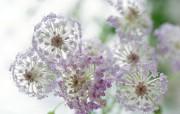 清新淡雅的花卉艺术 清新淡雅的花卉艺术 花卉壁纸