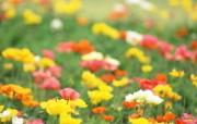 野花烂漫 清新风格花卉摄影壁纸 清新唯美 彩色野花壁纸 1920 1600 清新风格野花烂漫 花卉壁纸