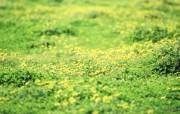 野花烂漫 清新风格花卉摄影壁纸 清新唯美 遍地的小野菊壁纸 1920 1600 清新风格野花烂漫 花卉壁纸