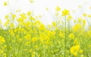 野花烂漫 清新风格花卉摄影壁纸 清新怡人 田野野花壁纸 1920x1200 清新风格野花烂漫 花卉壁纸
