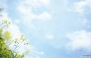 野花烂漫 清新风格花卉摄影壁纸 蓝天下的油菜花壁纸 1920x1200 清新风格野花烂漫 花卉壁纸