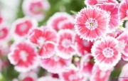 野花烂漫 清新风格花卉摄影壁纸 清新唯美 野花花卉壁纸 1920 1600 清新风格野花烂漫 花卉壁纸