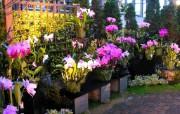 温室花卉图片 Flowers in Greenhouse 日本温室花卉展览馆 花卉壁纸