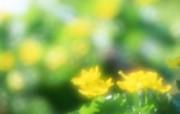 朦胧梦幻的鲜花图片 柔光摄影 梦幻唯美野花摄影 花卉壁纸