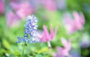 柔光摄影 梦幻野花壁纸 柔光摄影 梦幻唯美野花摄影 花卉壁纸