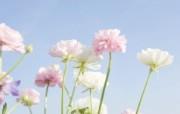 1920 1200 梦幻唯美 野花壁纸 柔光摄影 梦幻唯美野花摄影 花卉壁纸