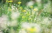 1920 1200 柔光摄影 梦幻野花壁纸 柔光摄影 梦幻唯美野花摄影 花卉壁纸