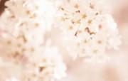柔光效果 朦胧柔和鲜花图片 柔焦摄影朦胧浪漫花卉摄影 花卉壁纸