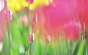 柔焦摄影 朦胧柔和鲜花图片 柔焦摄影朦胧浪漫花卉摄影 花卉壁纸