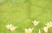 柔焦摄影 朦胧柔和花卉图片 柔焦摄影朦胧浪漫花卉摄影 花卉壁纸